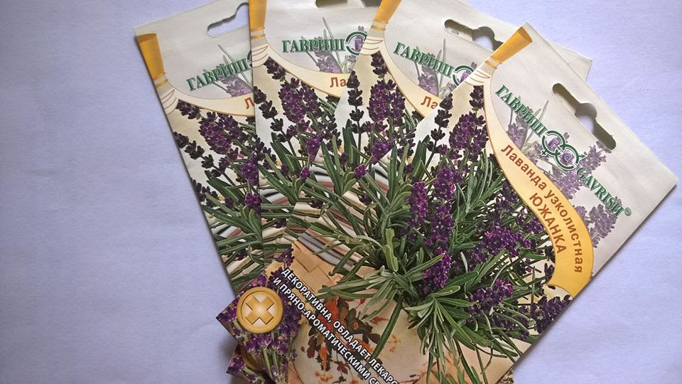 Các loại hạt giống hoa Nga