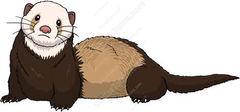 Brown Ferret With A White Face Cartoon Clipart   Vector Toons