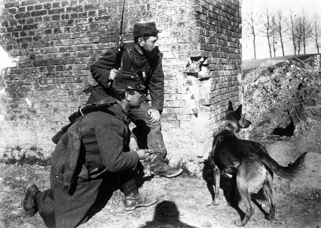 Os animais também lutaram na Primeira Guerra Mundial 36
