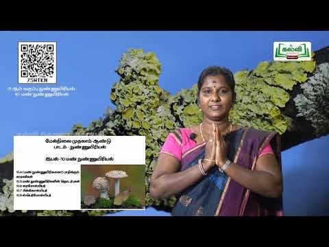 11th MicroBiology மண் நுண்ணுயிரியல் அலகு 6 பகுதி1 Kalvi TV
