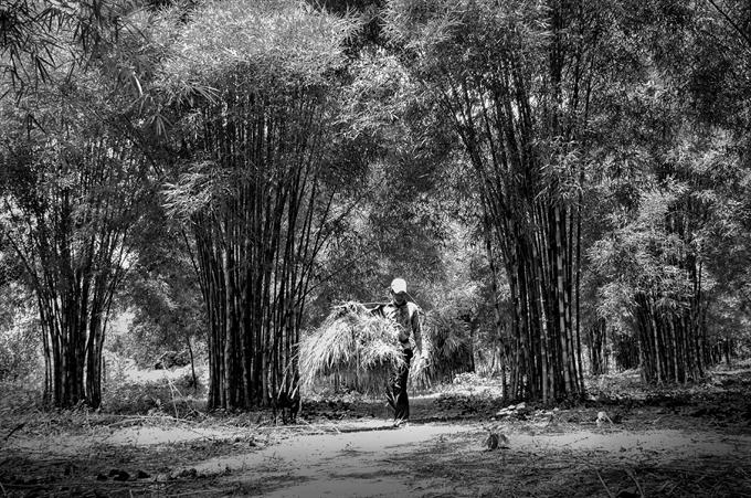 Hương sắc Việt Nam: Bốn chữ 'Làng quê Việt Nam' mộc mạc, giản dị mà thân thương quá đỗi…