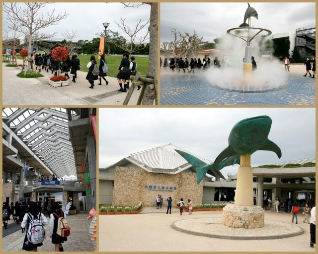 En route to Churaumi Aquarium at Ocean Expo Park in Okinawa