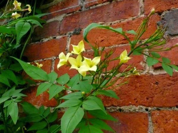 Colores para las paredes del patio o la terraza