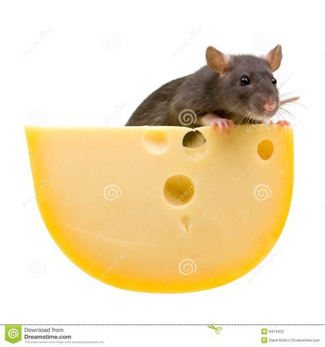 Funny Rat And Cheese Isolated On White Stock Photography   Image: 9474452