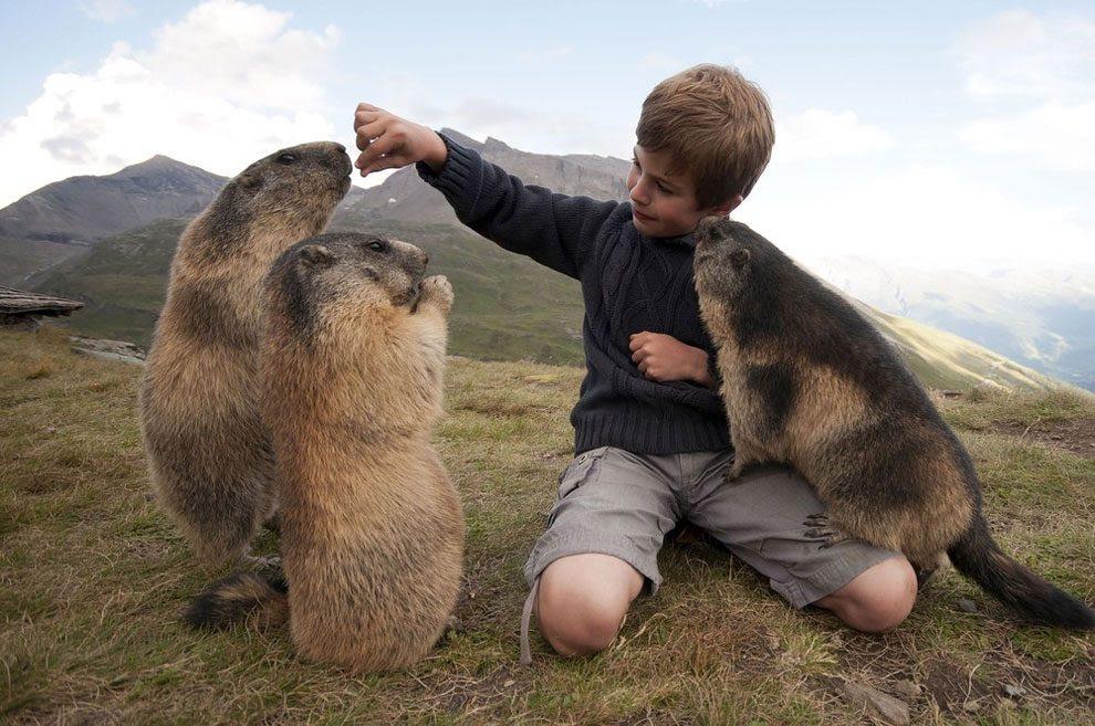 μαρμότες Αξιαγάπητες φωτογραφίες ενός μικρού αγοριού από την Αυστρία με μερικές μαρμότες