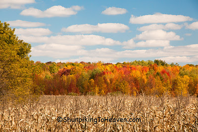 Autumn Cornfield, Wood County, Wisconsin