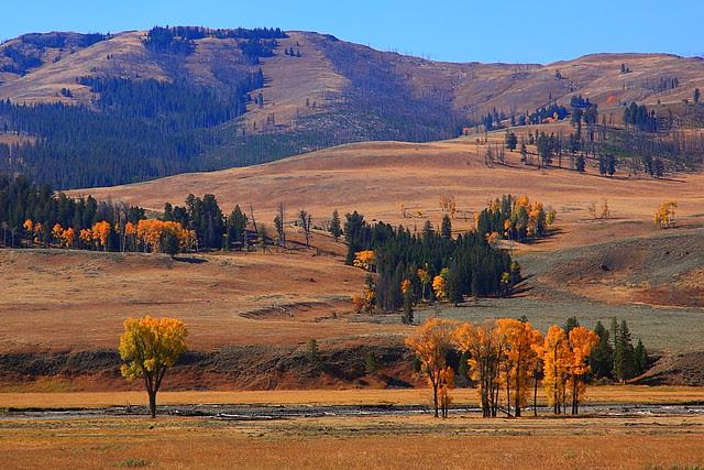 IMG_8404 Lamar Valley, Yellowstone National Park