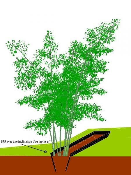 mes bambous haies de bambous. Black Bedroom Furniture Sets. Home Design Ideas