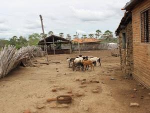 Restante da criação de ovelhas de Gildenor Sena (Foto: Pedro Santiago/G1)