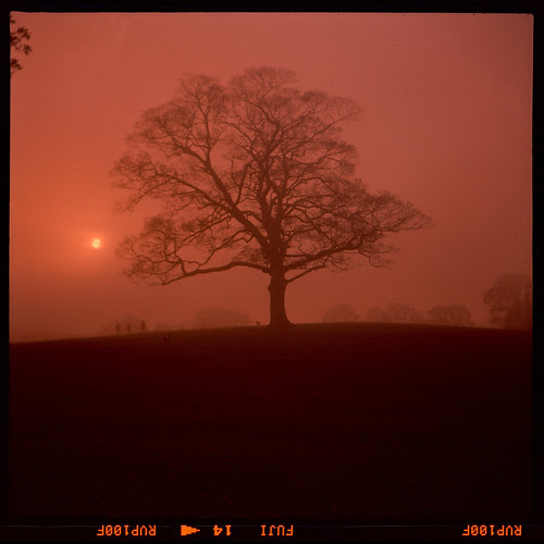 Sycamore in the mist by pho-Tony