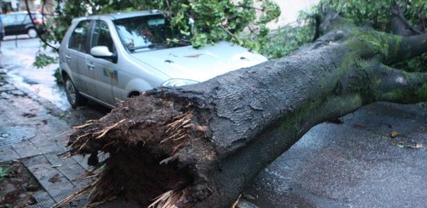 Chuva que atingiu Belo Horizonte provocou queda de árvores, como na rua Peçanha, no bairro Carlos Prates
