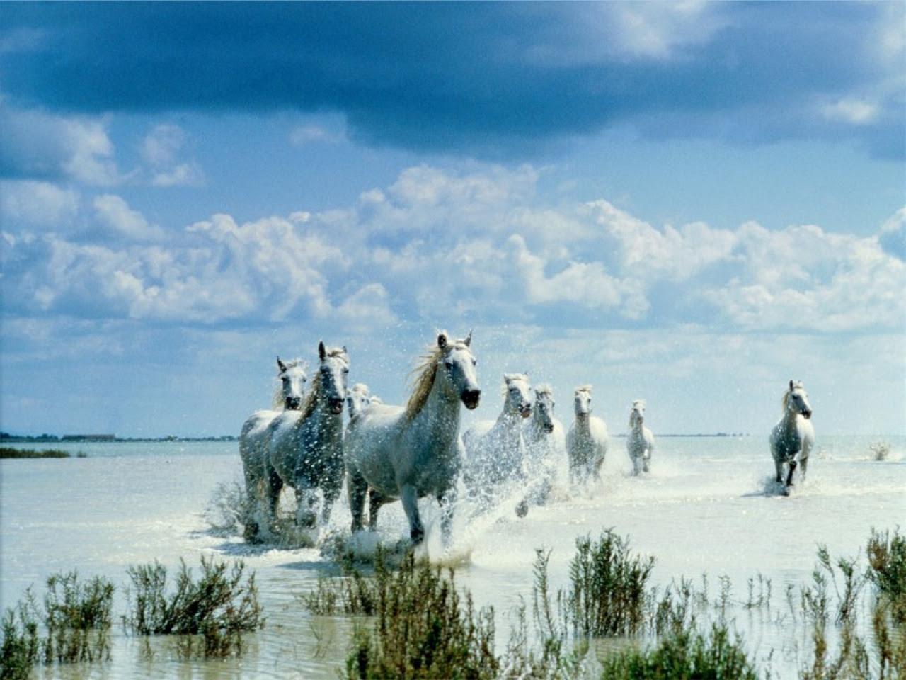 Kuda Alam Yang Indah Wallpaper Fanpop