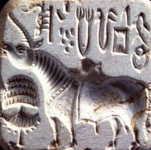 indus_one_horn_animal_seal