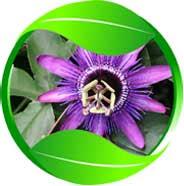 icon-passiflora