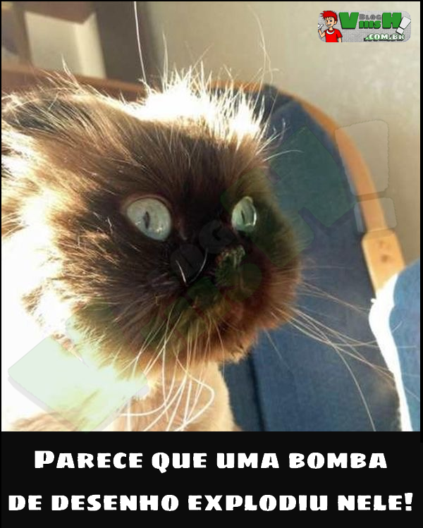 Blog Viiish - O gato explodido