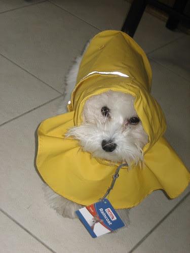 Toby's new raincoat