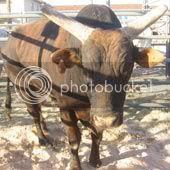 PBR Bull Mossy Oak Mudslinger