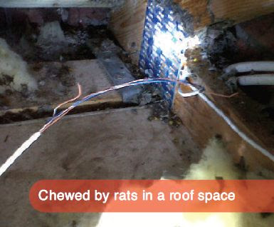 Pest Control Services UK: Rat facts