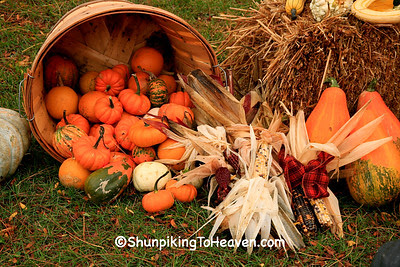 Gourds, Squash, and Indian Corn, Pepin County, Wisconsin