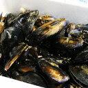 石巻荻浜産 活ムール貝5kg 三陸のムール貝は秋から冬にかけてが旬です!