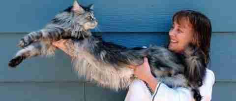 Longest-domestic-cat-600x320