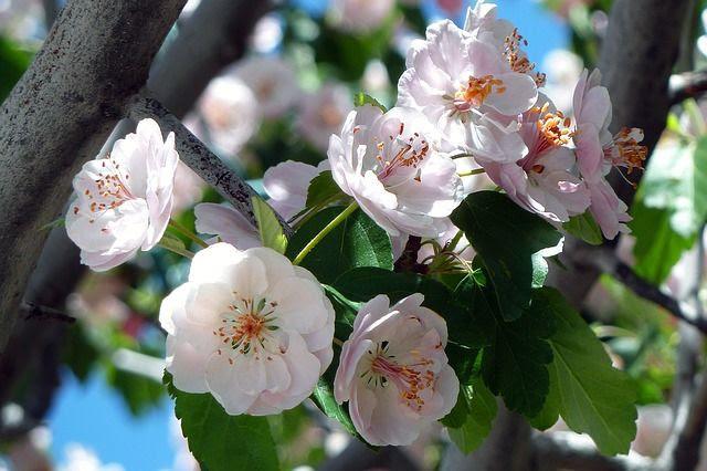 Brilla como las flores con la compañía de felicidad como forma de vida