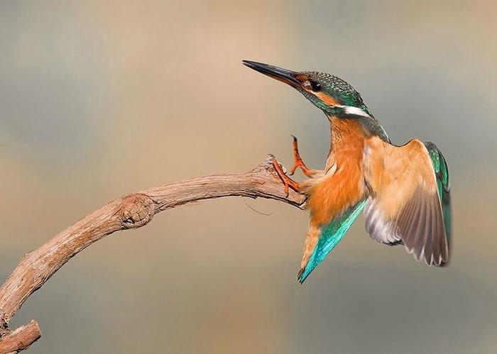 Bird_35 (700x499, 154Kb)