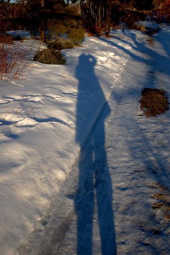 Mid-winter garden walk