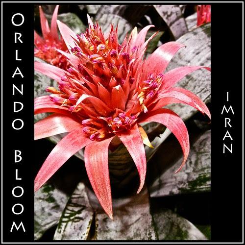 I Saw Orlando Bloom. Seriously! - IMRAN™ by ImranAnwar