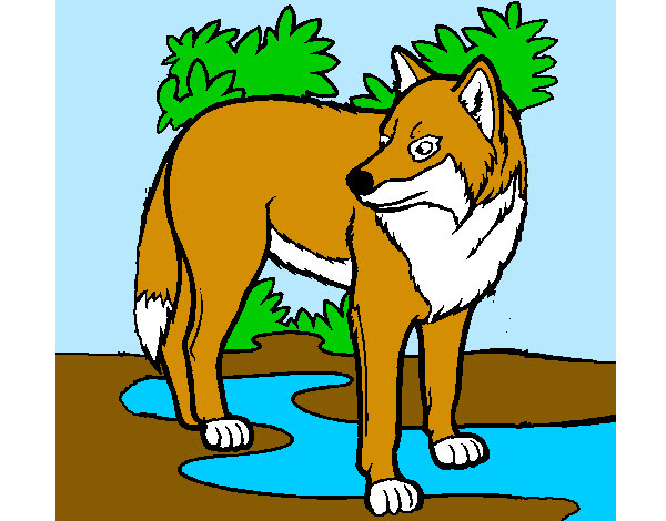 Dibujo De Lobo Pintado Por Juan 3 En Dibujosnet El Día 21 10 12 A