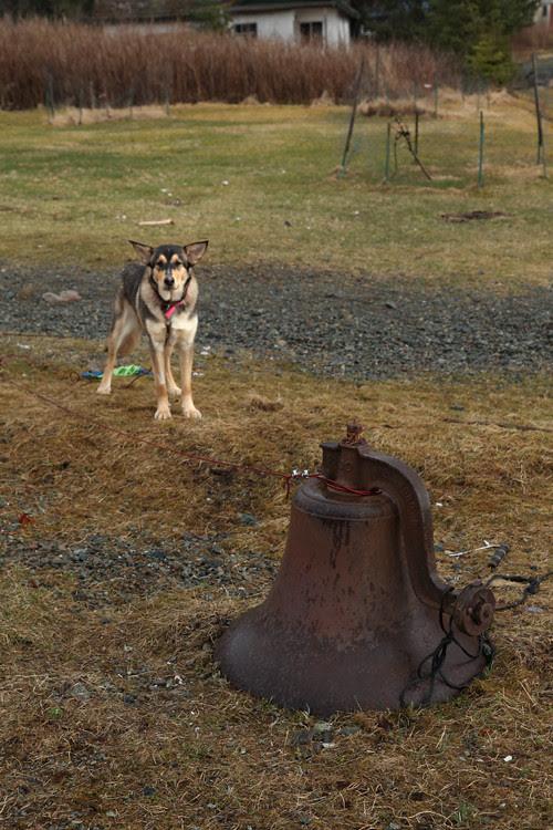 dog and bell, Kasaan, Alaska