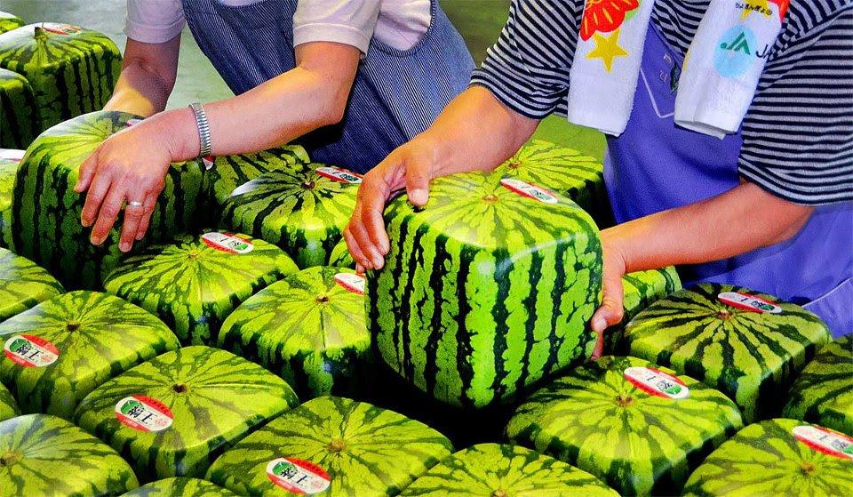 perierga.gr - Γιατί οι Ιάπωνες καλλιεργούν τετράγωνα καρπούζια;