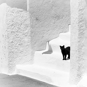 Black and white by Magali K. (penhad) on 500px.com