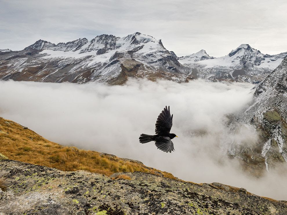 National Park of Gran Paradiso - the oldest national park in Italy