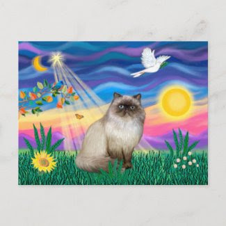 Chocolate Point Himalayan Cat - Twilight postcard