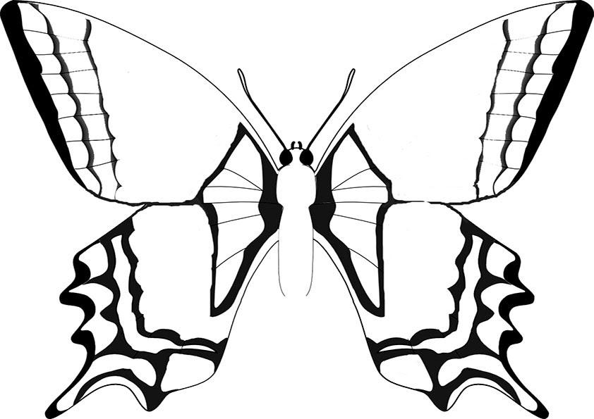 Ausmalbilder Schmetterling 9 | Ausmalbilder Malvorlagen
