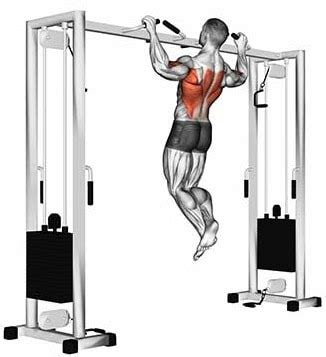 pull ups guide muscles worked  benefits explained