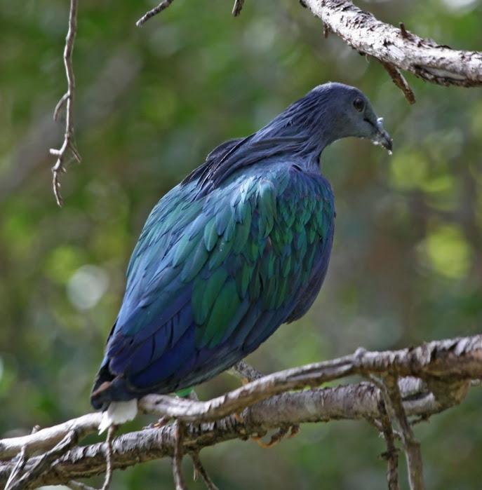 Rare beautiful birds