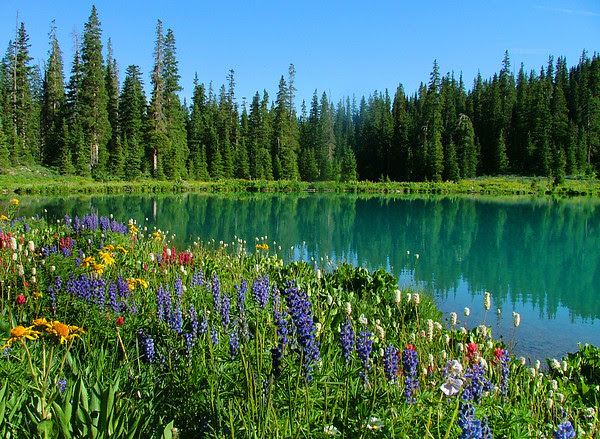 wildflower paradise