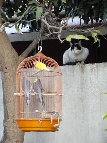 Cat Wants a Birdie Meal