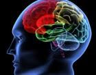 """Scientists create a """"mini-brain"""""""