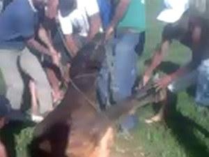 Ao todo, 12 homens participaram do resgate da vaca (Foto: Joel Gonçalves dos Santos/ VC no G1)