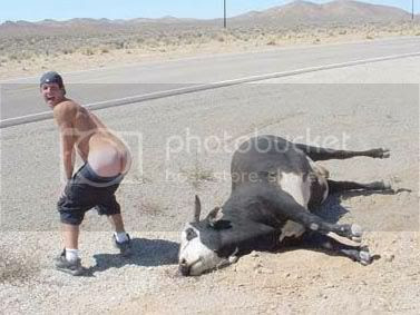 Mooning a dead cow