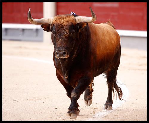 Toro de Peñajara