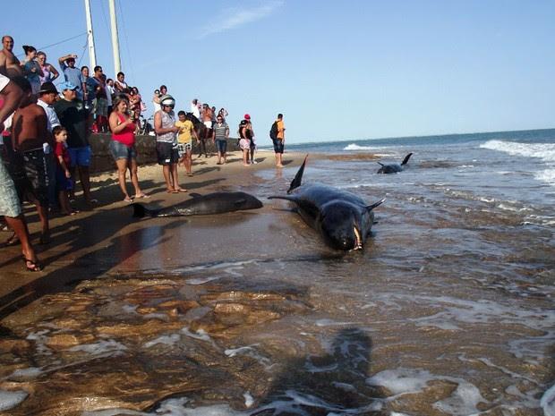Baleias encalharam na praia de Upanema, em Areia Branca (Foto: Carlos Júnior/VC no G1)