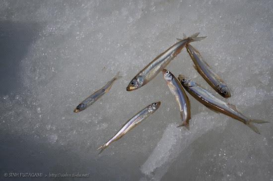 20130320-DSC_9602icefishing