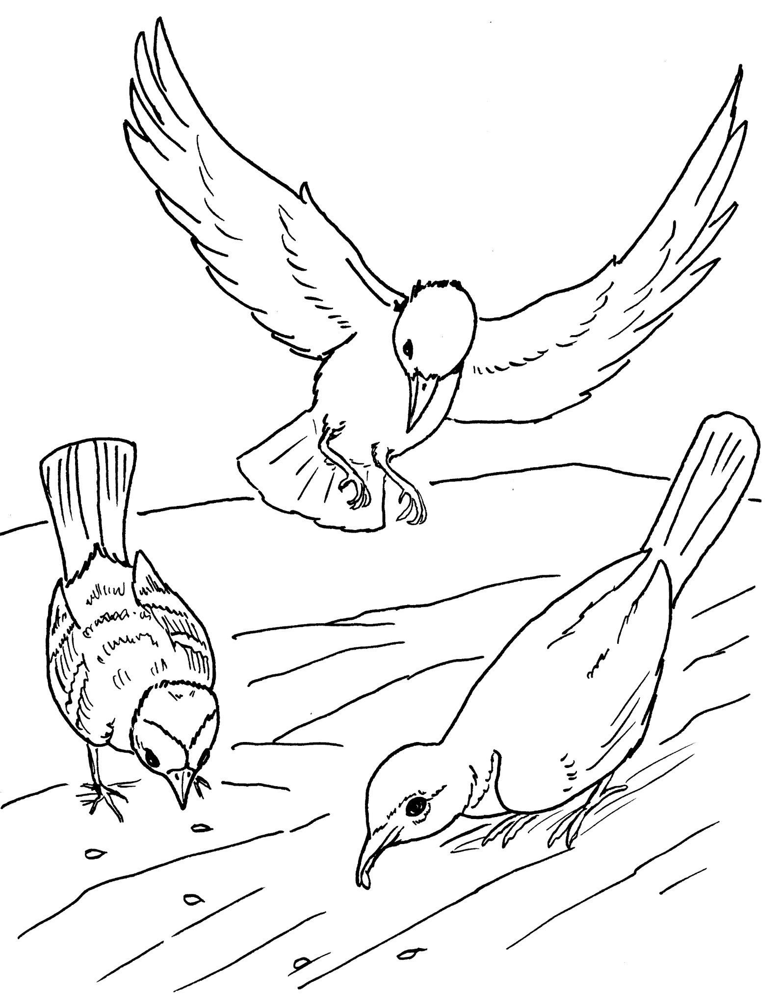 Dessin de oiseau gratuit a imprimer et colorier
