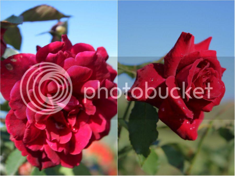 photo a2_zps9hn19u66.jpg