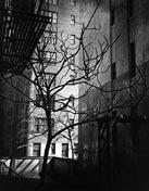 Φωτογραφίες από Brett Weston σε έκθεση στο Steven Kasher Gallery στη Νέα Υόρκη, μέσω της 3η Νοεμβρίου