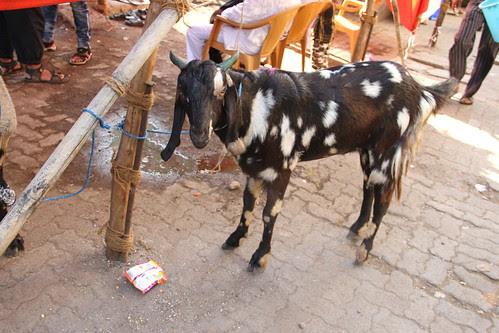 Bhai Ham Katar Main Hain..Maut Ko Eid Mubarak Karne Ke Intezar Main Hain by firoze shakir photographerno1